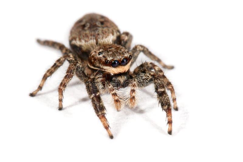 Download Spider stock image. Image of brown, cutout, creepy, arachnida - 15678887