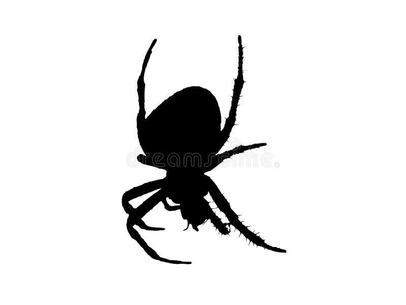 Spider. Harmless small spider. Vector illustration vector illustration