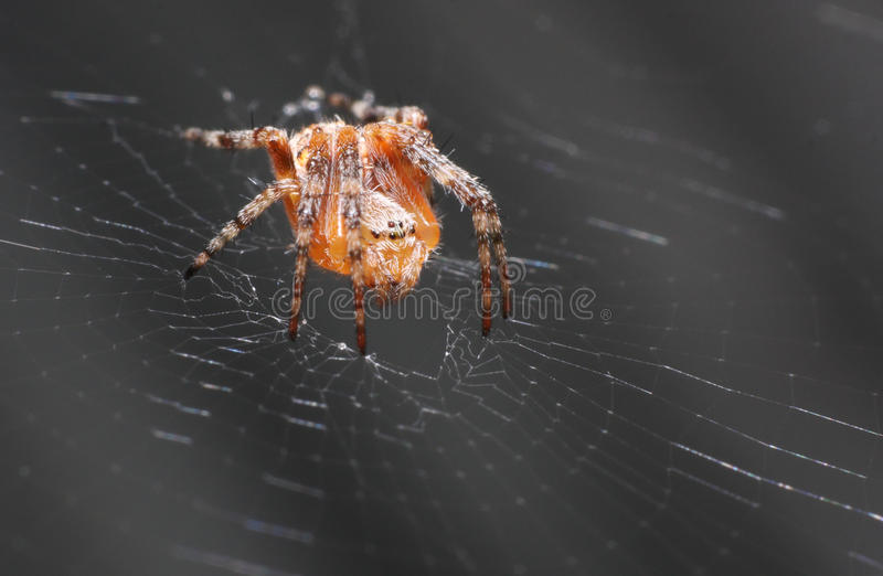 Download Spider stock image. Image of close, legs, black, nature - 18318865