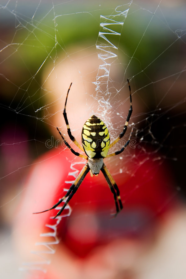 Free Spider Stock Photos - 2063883