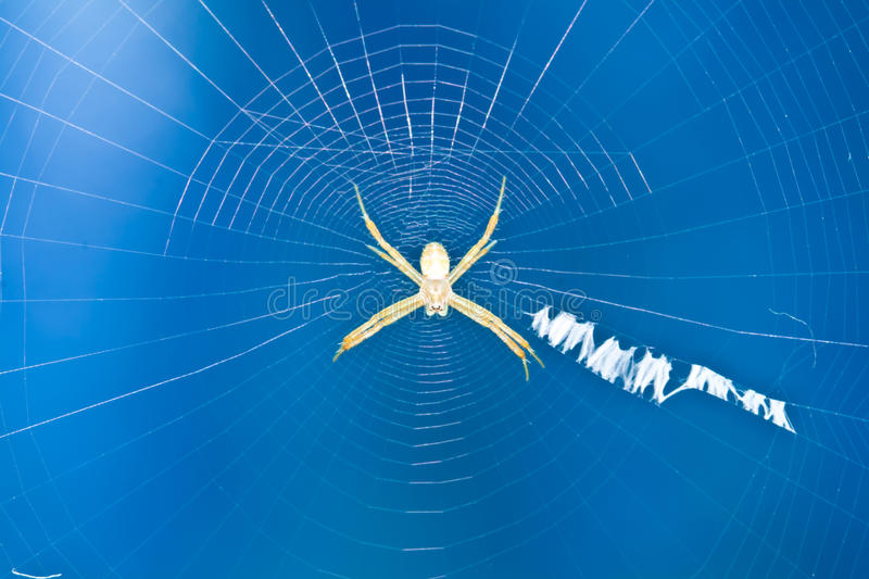 Download Spider stock image. Image of morning, animal, blue, close - 21399377