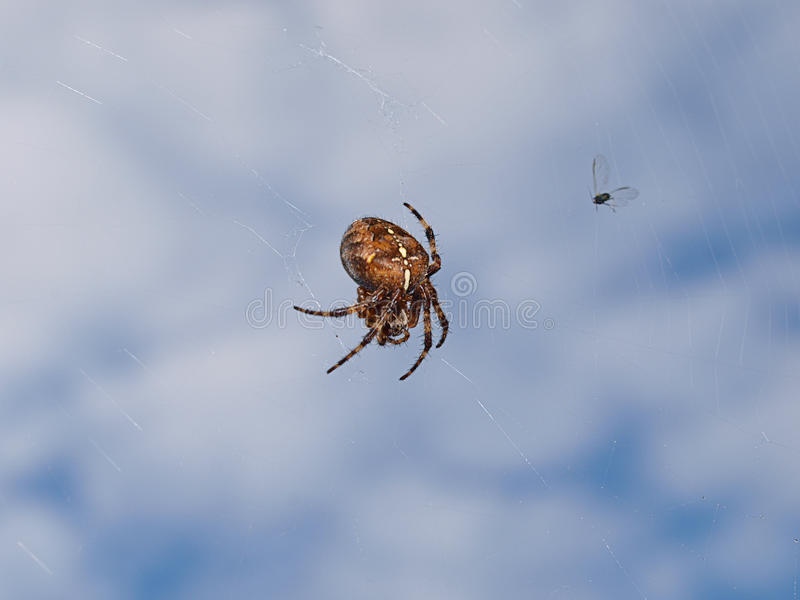 Download Spider stock image. Image of free, trap, strands, creature - 21493325
