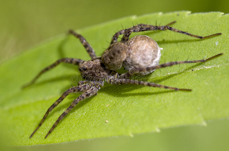 Download Spider Royalty Free Stock Photo - Image: 22926495