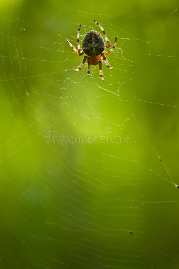 Download Spider stock photo. Image of colorful, arachnophobia - 24672996