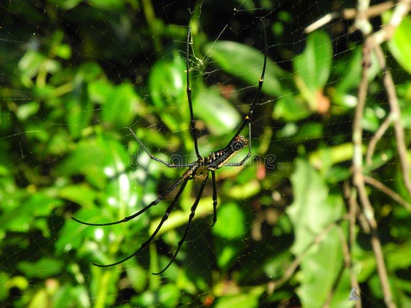 Download Spider stock photo. Image of lines, spiderweb, outdoor - 25658916