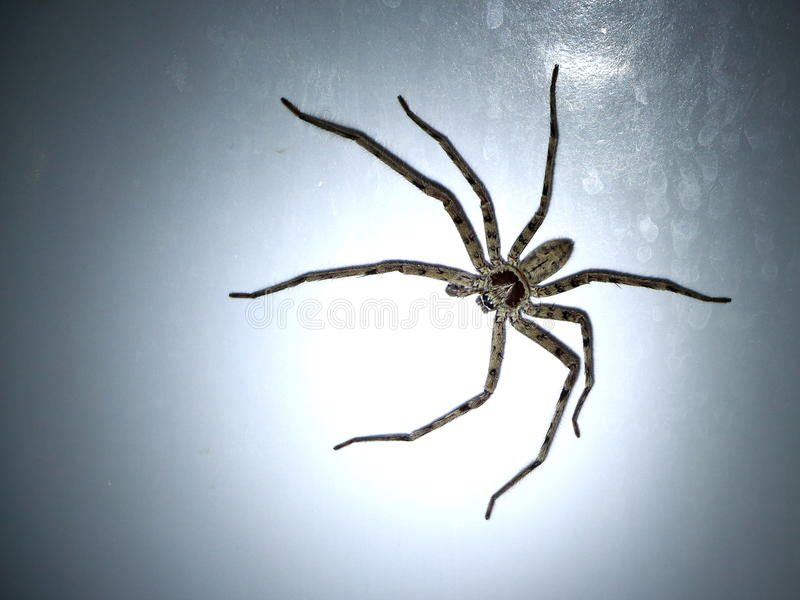 Spider. Big spider on the white wall in the bathroom royalty free stock images
