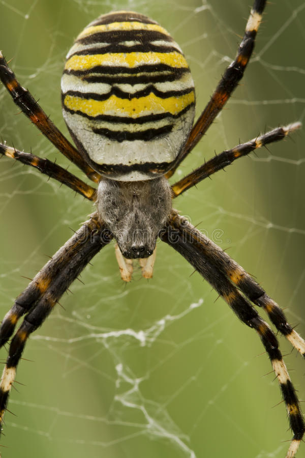 Free Spider Stock Images - 30270424