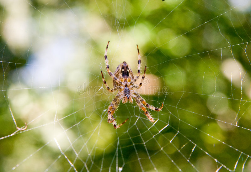 Download Spider stock image. Image of animal, arachnoid, spider - 3584317