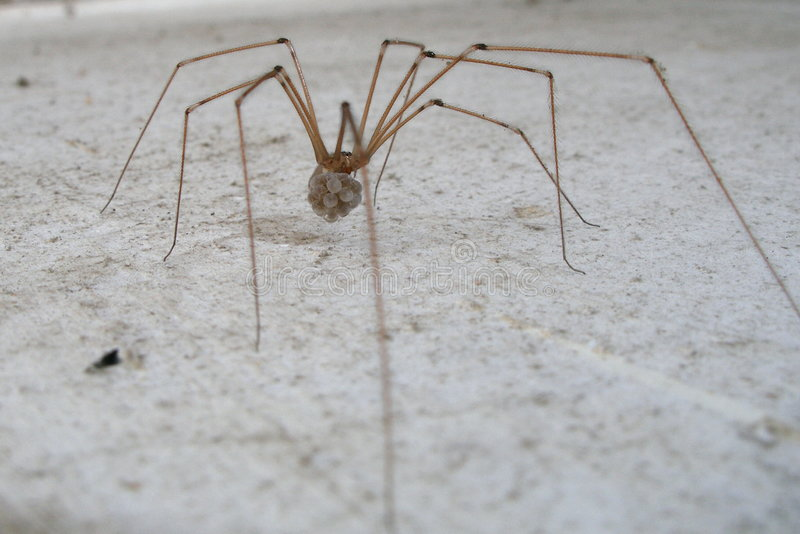 Download Spider stock image. Image of exit, flee, cobweb, fear, insect - 368203