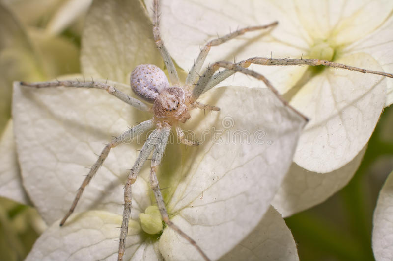 Spider 4 stock photography