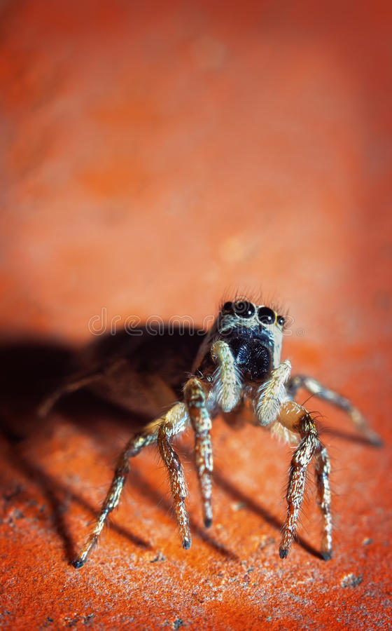 Spider 6 royalty free stock photo