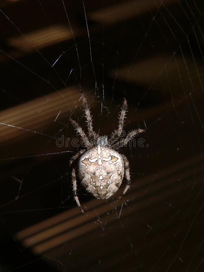 Download Spider stock image. Image of spiderweb, fang, ugly, brown - 957871