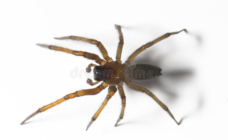 Download Spider Stock Images - Image: 9626854