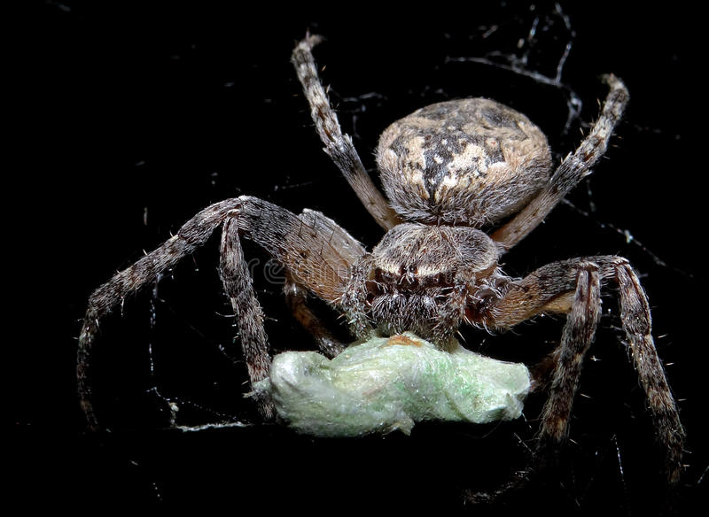 Spider. In the attic of the old house, summer, ukraine royalty free stock image