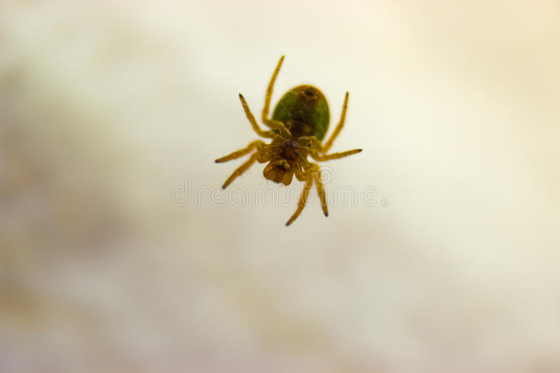 Spider basking in the spring sunshine royalty free stock image