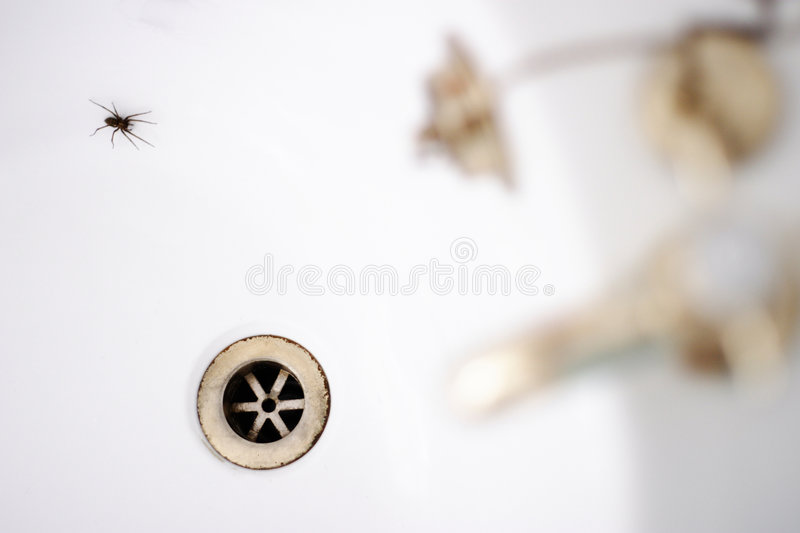 Spider in the bath. Spider in a white bath with gold taps royalty free stock image