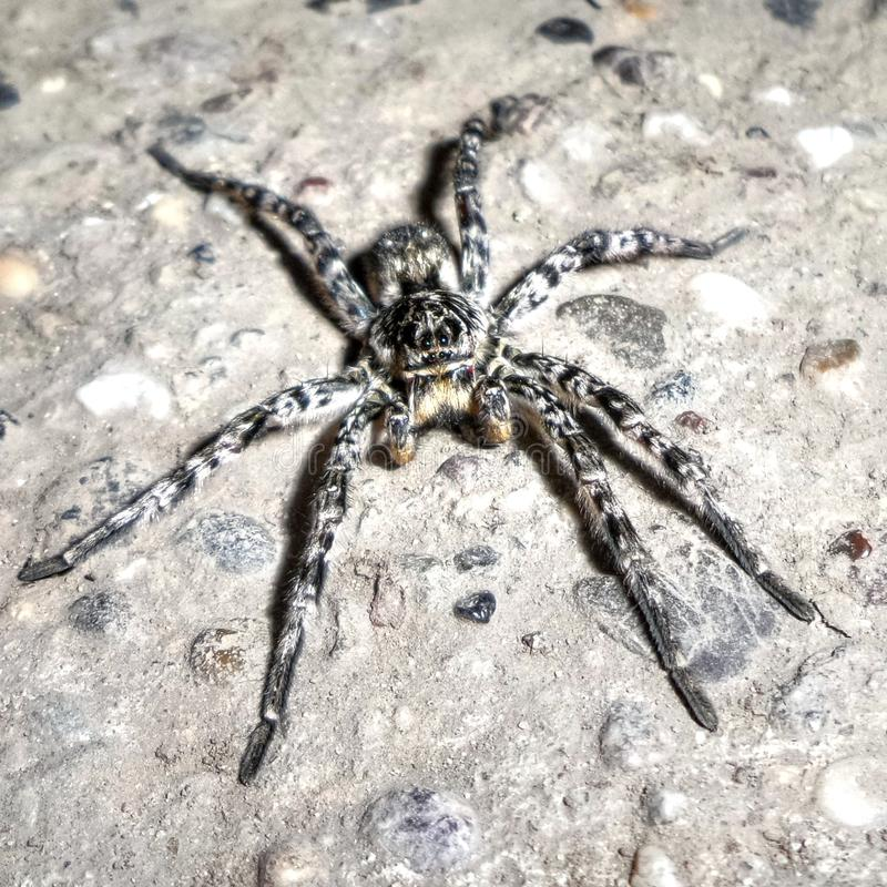 Download Spider Stock Photo - Image: 83721520