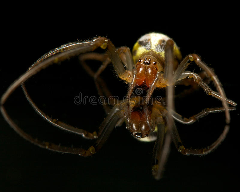 Download Spider on black stock image. Image of black, reflect - 26393979