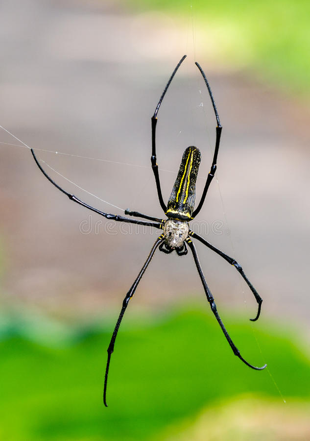 Spider With Bokeh Background Stock Image - Image of indonesia, java ...