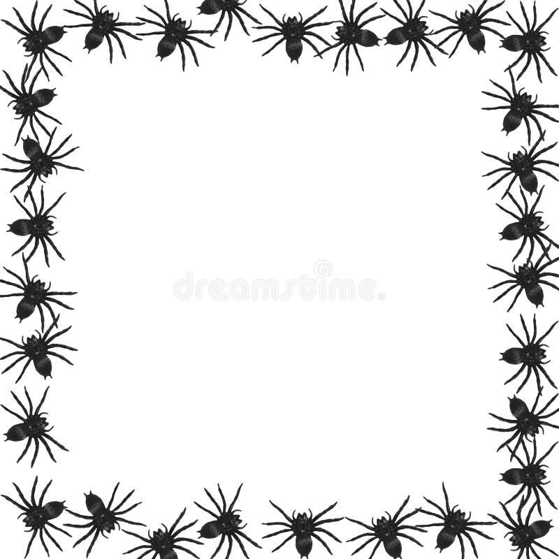 Spider border vector
