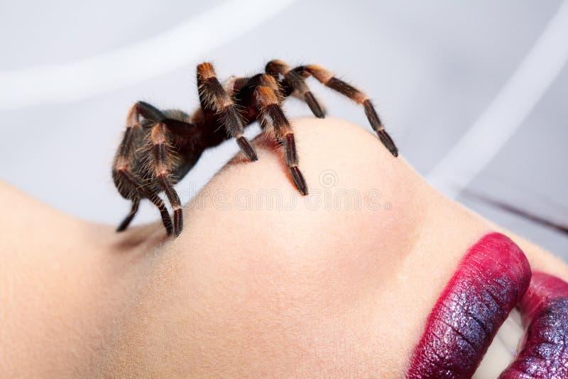 Spider Brachypelma smithi on girl s chin