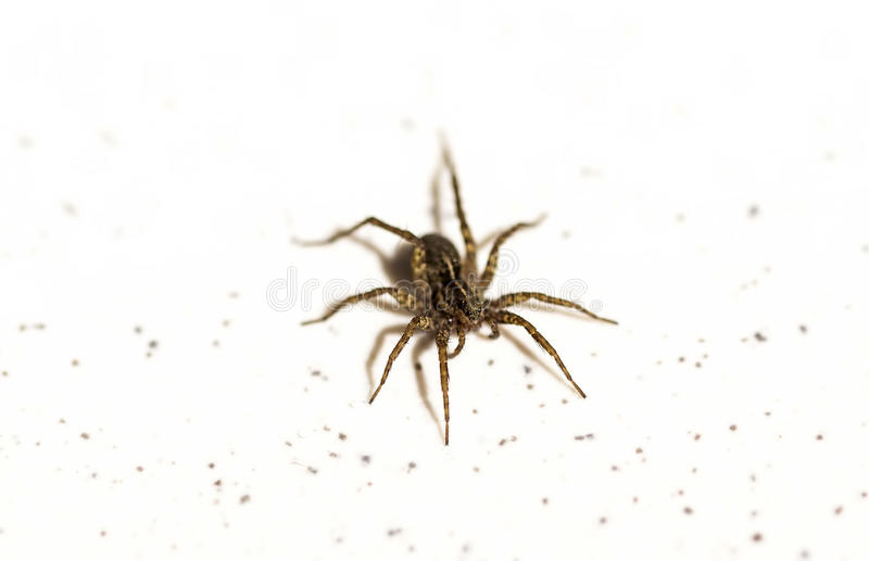 Spider with Bright Eyes. A close up view of a spider with bright eyes stock photography