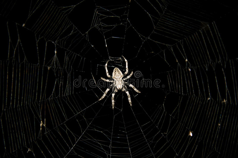 Download Spider In The Center Of A Web Stock Image - Image: 26801961