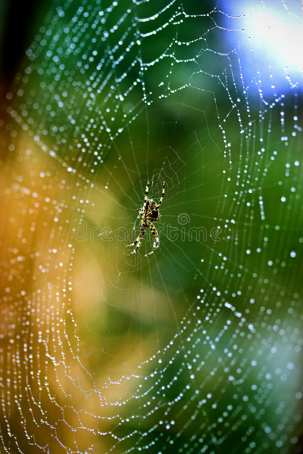 Download Wet Spider Web Royalty Free Stock Image - Image: 27325756