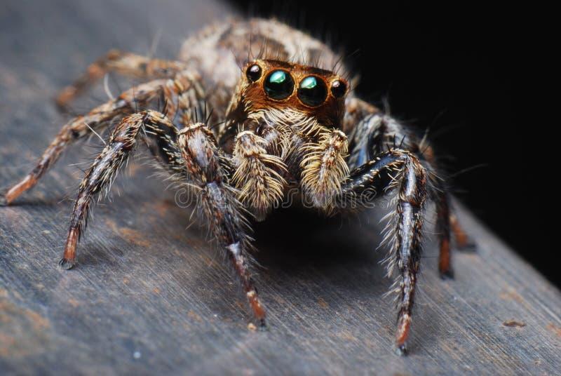 Spider Closeup royalty free stock photos