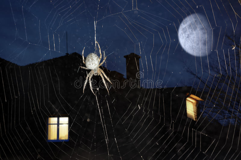 Download Spider on cobweb stock image. Image of phobia, fear, urban - 23433565
