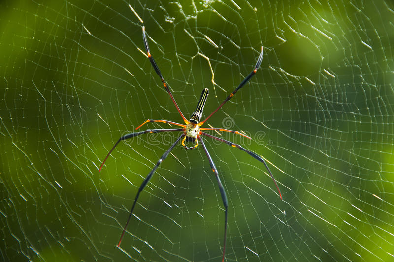 Spider. Spider on cobweb in a wild close up stock photo