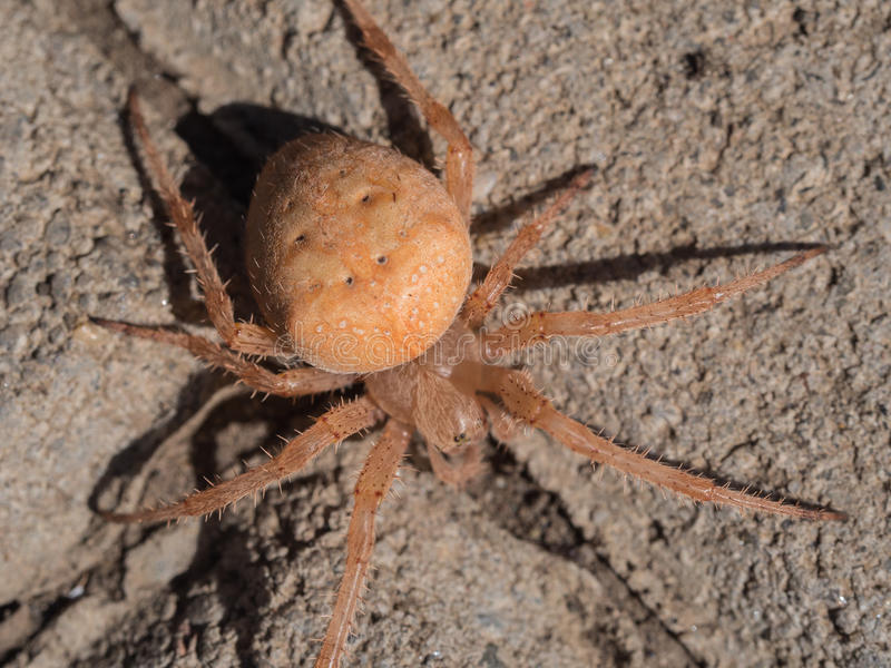 Spider on a concrete pavement. Macro photo of a spider on a concrete pavement. The photography has been taken in August 2016. Additional RAW file available for stock images