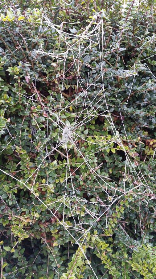 Spider& congelado x27; Web de s imagem de stock