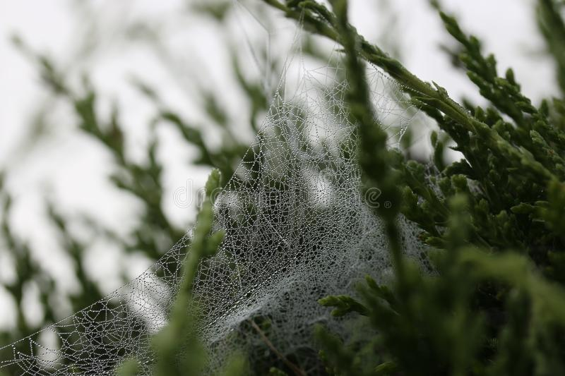 Spider Cow Webs On Green Leafed Plant Free Public Domain Cc0 Image