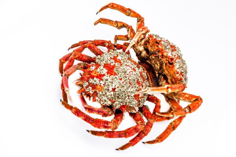 Download Spider Crab stock image. Image of shellfish, fish, seafood - 26327179