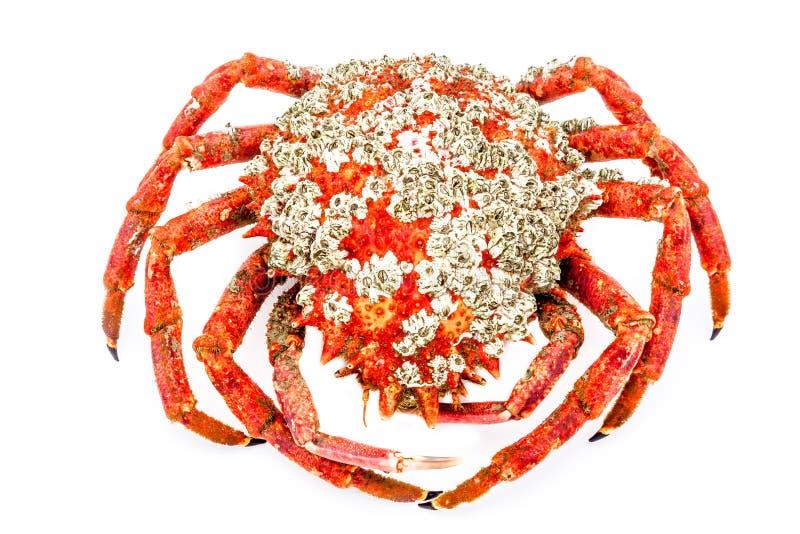 Spider Crab Stock Photo