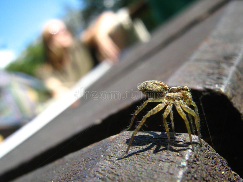Spider crawling outdoors royalty free stock image