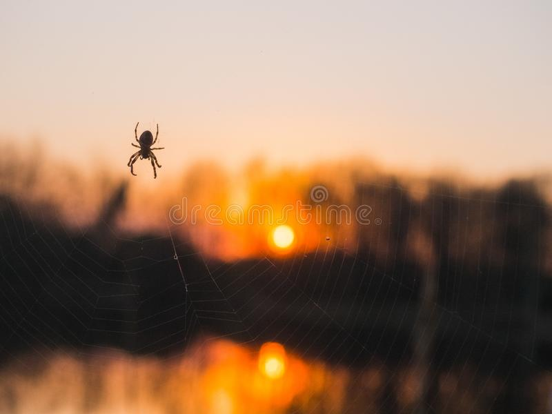 Spider crawling over the lake at sunset stock images