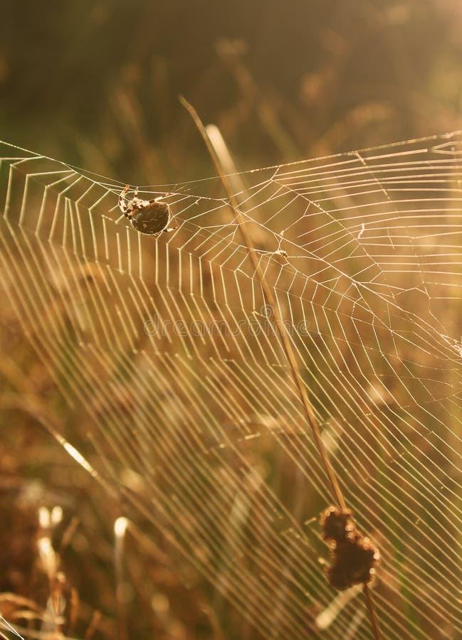 A spider creates a web an autumn evening. stock photo
