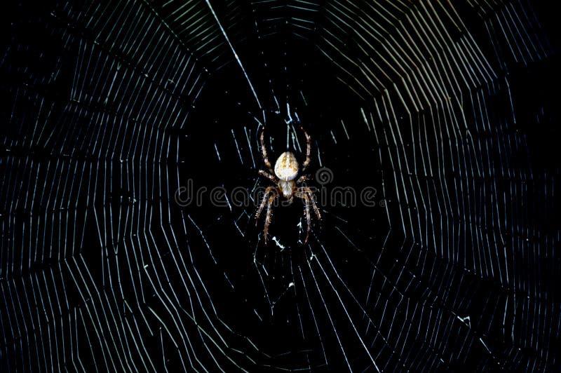Spider in the dark. Macro royalty free stock image
