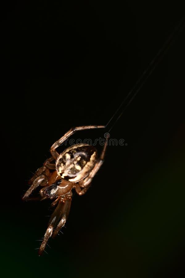 Spider in the dark backgound. Closeup stock photo