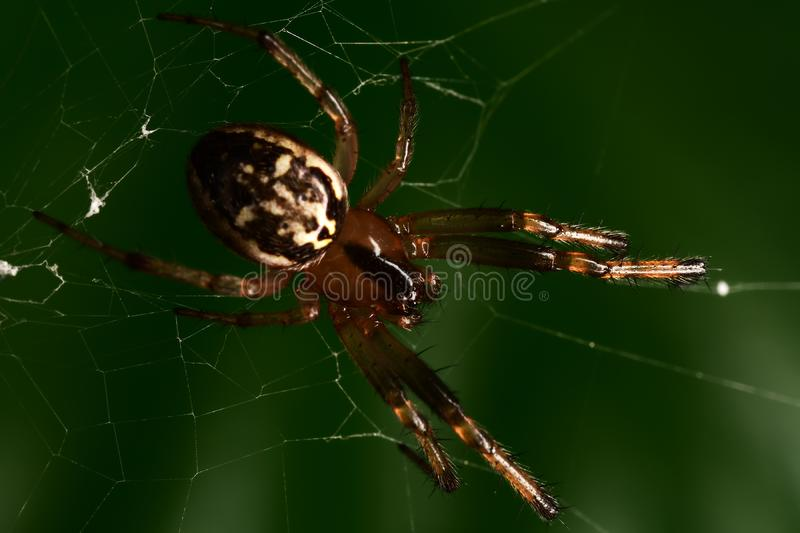 Spider in the dark green backgound. Closeup royalty free stock photography