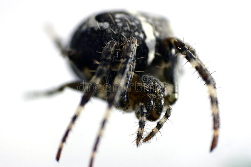 Spider detail royalty free stock image
