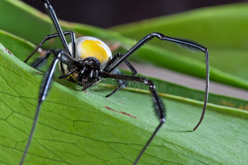 Spider detail royalty free stock photo