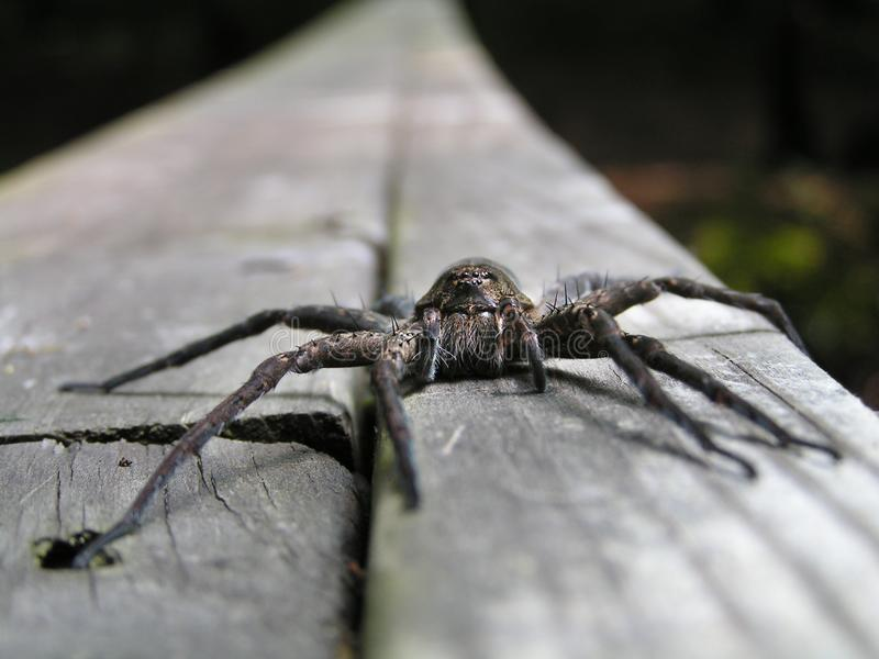 Download Spider Face Stock Photo - Image: 28411080