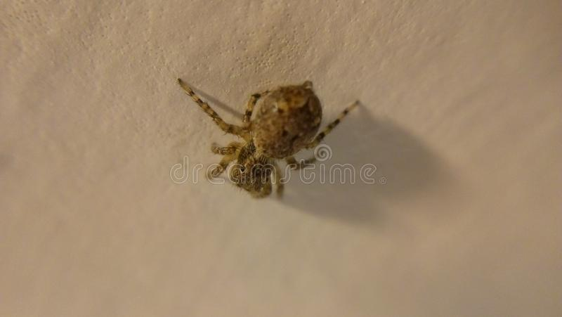 Spider on the floor stock photos