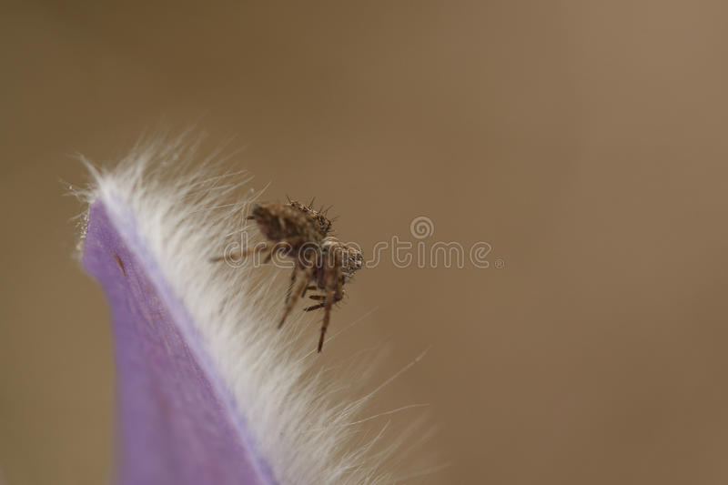 Download Spider on a flower stock photo. Image of orchidaceae - 24712102