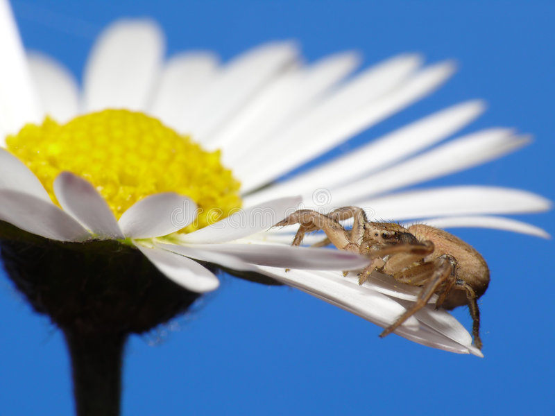 Spider on flower stock photo