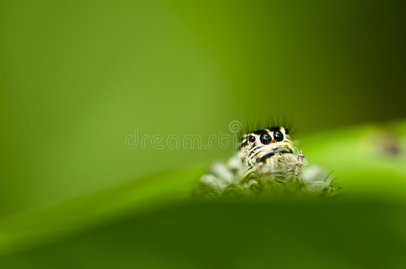 Spider on green leaf nature stock photography