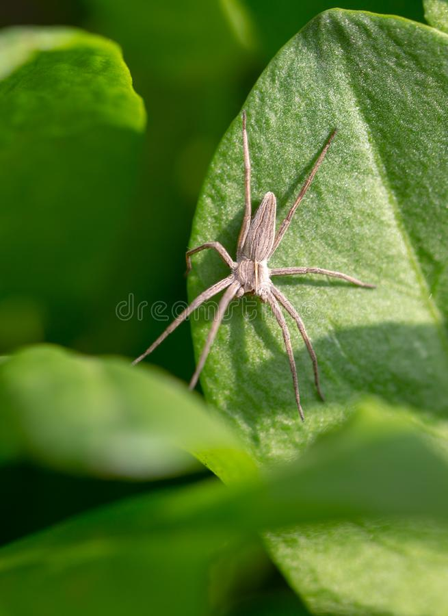 Spider on a green leaf of a plant stock images
